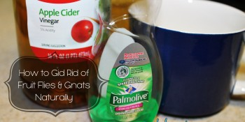 How to Get Rid of Fruit Flies and Gnats