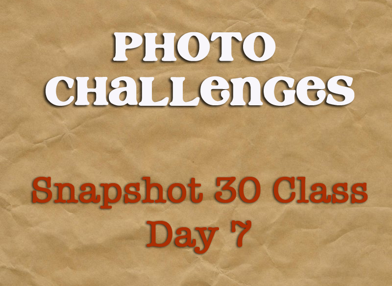 Snapshot 30 Class: Learn How to Take Better Photos {Day 7}